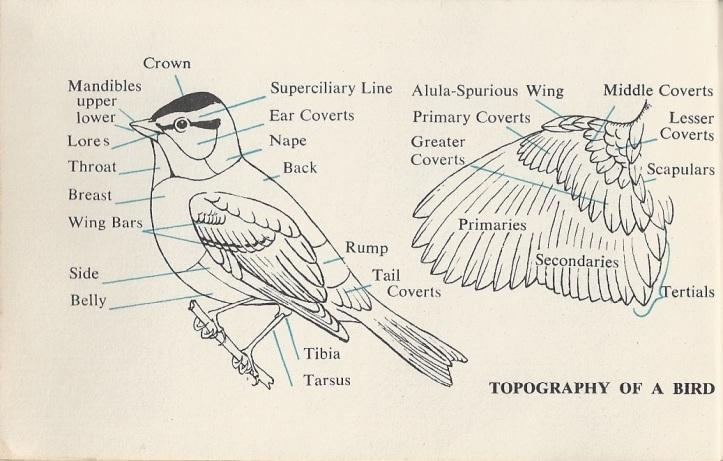 birdwatching 3