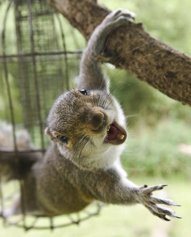 Street Food Squirrel
